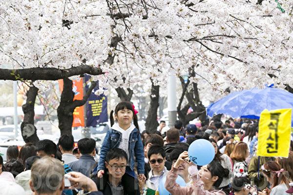 一年一度的韩国首尔汝矣岛樱花节,赏花客人山人海。该庆典将于4月9日结束。(全景林/大纪元)