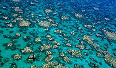 AUSTRALIA-ENVIRONMENT-BLEACHING-REEF-CONSERVATION