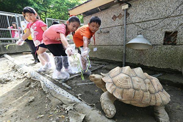 小朋友在寿山动物园体验喂食象龟。(高市观光局提供)