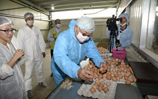人道饲养鸡 菊鸟畜牧场通过双认证