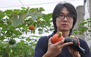 花蓮青農盧紀燁教大家如何挑選成熟的小紅、小黑栗子南瓜。(詹亦菱/大紀元)