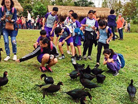 體驗餵鴨。(宜蘭縣政府提供)