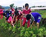 綠博五感食農趣 體驗 周末登場。(宜蘭縣政府提供)