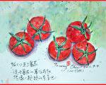 淡彩速写 / 牛番茄(图片来源:作者 邱荣蓉 提供)