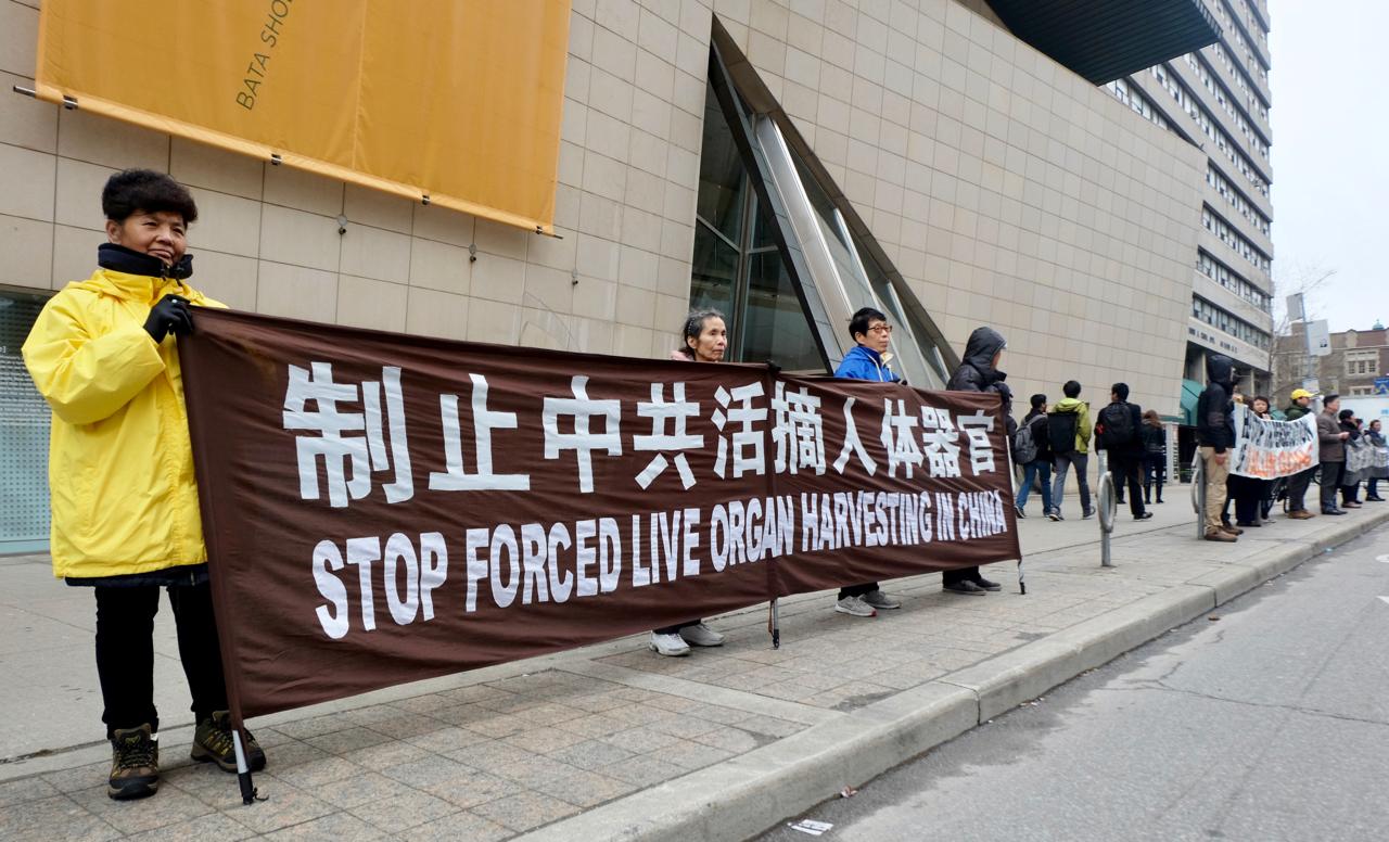 4月25日下午,上百名多倫多法輪功學員通過真相長城活動向市民揭示中共迫害法輪功真相。(周月諦/大紀元)