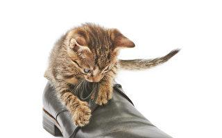 10个最受欢迎英国鞋履品牌+Clarks半价促销开始
