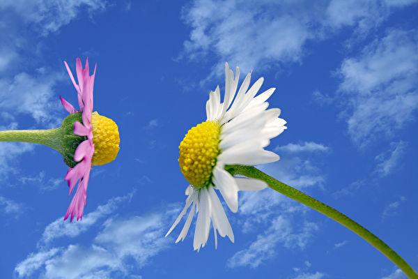 如果友谊是一朵灿烂的花,照耀它的想必是心中暖暖的太阳。(Fotolia)