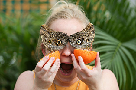 """A visitor poses for a picture with Owl butterflies during a photocall for the """"Sensational Butterflies"""" exhbition at the Natural History Museum in London on March 30, 2017. / AFP PHOTO / Daniel LEAL-OLIVAS        (Photo credit should read DANIEL LEAL-OLIVAS/AFP/Getty Images)"""