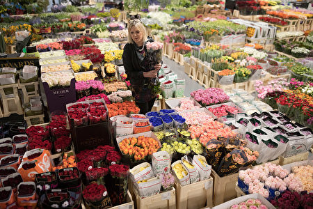 LONDON, ENGLAND - APRIL 03: A customer selects flowers inside the New Covent Garden Market on April 3, 2017 in London, England. The New Covent Garden Flower Market in Nine Elms opened it's doors this morning after moving from it's previous site, also in Nine Elms where it had been since 1974. (Photo by Dan Kitwood/Getty Images)