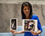 国防部长马蒂斯周三说,阿萨德政权似乎严肃对待了川普的警告,没有发动化学进攻。图为美驻联合国大使黑利在4月5日安理会会议上,手拿叙利亚化武攻击受害者的照片。 (Drew Angerer/Getty Images)