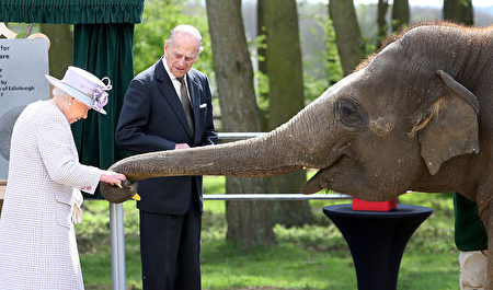 DUNSTABLE, ENGLAND - APRIL 11: Queen Elizabeth II and Prince Philip, Duke of Edinburgh feed Donna the elephant as they visit the Elephant Centre at the ZSL Whipsnade Zoo on April 11, 2017 in Dunstable, United Kingdom. The Queen and The Duke will meet the Head Elephant Keeper and view the elephant team carrying out daily care tasks such as nail filing and mouth care. Her Majesty and His Royal Highness will meet the Centre's project team, including zookeepers and architects, in front of the elephant paddock before proceeding to the amphitheatre where The Queen will unveil a plaque to mark the formal opening of the Centre. The Queen and The Duke will view an elephant being fed and meet keepers and vets before departing. (Photo by Chris Jackson/Getty Images)