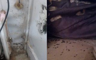 陳肖玲的臥室,因為太過潮濕,所以長滿了蟲子(右),牆也已經發霉得不成樣子(左)。 (陳肖玲提供)