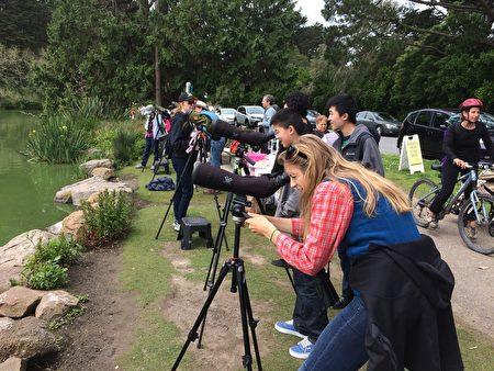 藍蒼鷺飛來金門公園築巢,絡繹不絕的鳥類愛好者們聚集在Stow Lake湖畔,捕捉蒼鷺的一舉一動。(林驍然/大紀元)