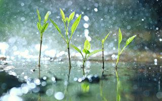 【七言】节气:谷雨