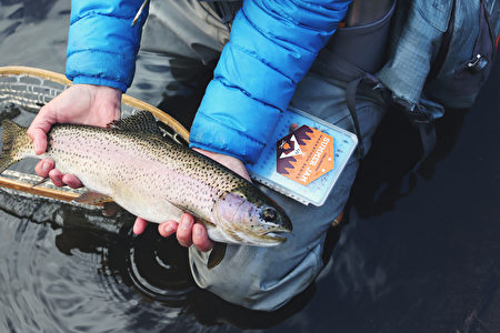 野生阿拉斯加鮭魚是更健康的選擇。(Sticker Mule/Unsplash)