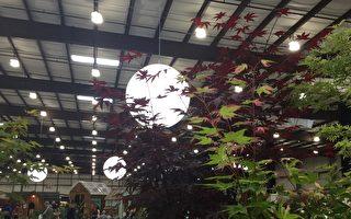 舊金山花卉園藝展正在聖馬刁展覽中心舉行。(王洪生/大紀元)