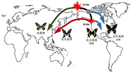 宽尾凤蝶的生物地理地图。〈吴立伟提供图片〉