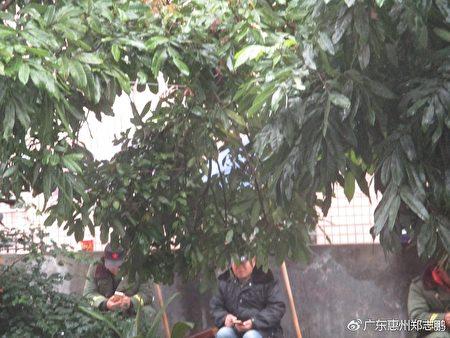 郑志鹏家门前的监视人员(郑志鹏提供)