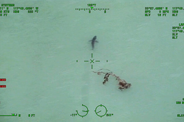5月10日,加州橙县海岸达纳点(Dana Point)拍摄到的大白鲨视频截图。(橙县警署提供)