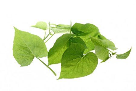 地瓜叶能促进新陈代谢与补充体力。(Fotolia)