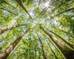 柏树森林和Congaree国家公园沼泽在南卡罗来纳(fotolia)