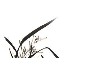 兰花宽容和顺的性情。不像牡丹富贵逼人;也未及玫瑰娇艳夺目,它的光芒藏于内而非显于外。(Fotolia)(fotolia)