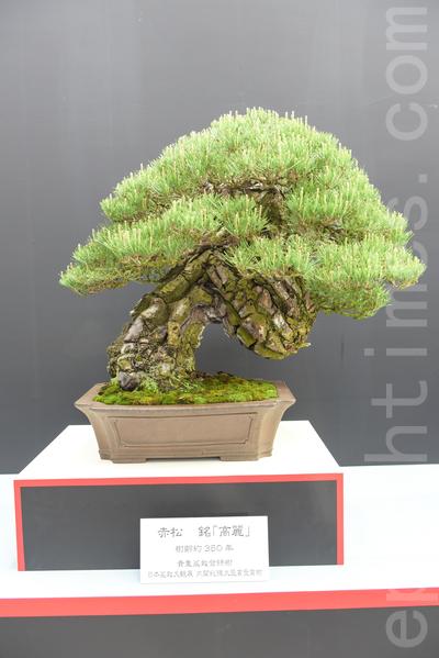 世界盆栽盆景珍品