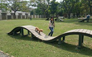 高雄中正路寵物公園,飼主與毛小孩開心玩波浪板。(高市養工處提供)
