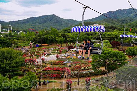 韩国首尔大公园玫瑰花盛开,庆典期间为5月27日至6月11日,园内有许多特色造景。(全景林/大纪元)