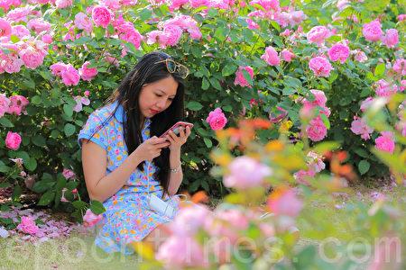 韩国首尔大公园玫瑰花盛开。首尔大公园玫瑰花庆典期间为5月27日至6月11日。(全景林/大纪元)
