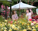 韩国首尔大公园玫瑰花盛开,庆典期间为5月27日至6月11日。赏花民众纷纷拍照留念。(全景林/大纪元)