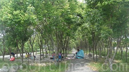 森林故事区,环境营造出树林环绕凉荫的绿色隧道意境。(杨秋莲/大纪元)