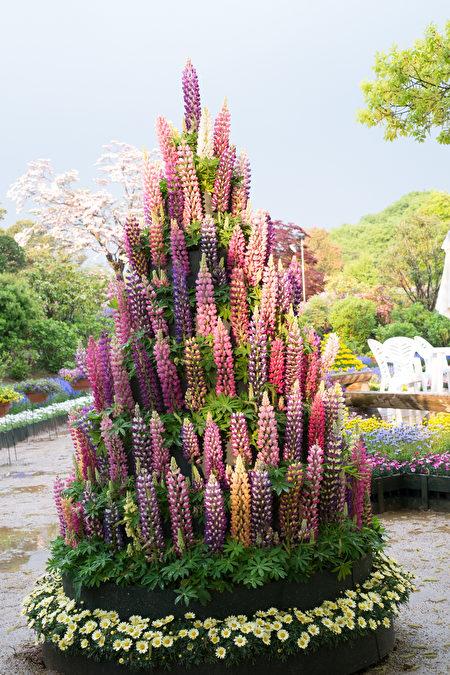 """日本栃木足利花卉公园曾被美国CNN选为""""全球十大梦幻旅游景点""""之一。一年四季都有鲜花可以欣赏。(野上浩史/大纪元)"""