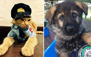 澳洲新南威爾士州警署(NSW Police Force)去年領養的貓咪艾德,與剛加入警犬隊伍的小狗崽。(Facebook: NSW Police Force/大紀元合成)