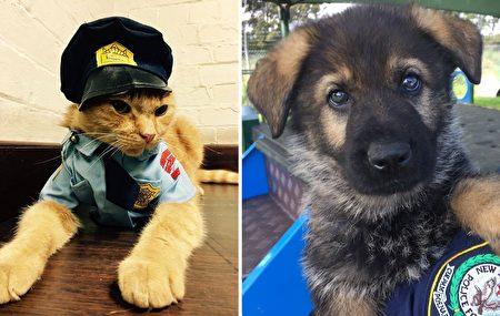 澳洲新南威尔士州警署(NSW Police Force)去年领养的猫咪艾德,与刚加入警犬队伍的小狗崽。(Facebook: NSW Police Force/大纪元合成)