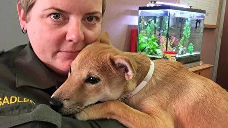 受到虐待、名为Aniki的柴犬,被旧金山动物护理与管理局托管。(旧金山动物护理与管理局提供)