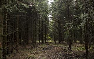 世界各地發現大片未記錄森林 面積超過半個澳洲