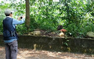 二水保育解說志工調查記錄獼猴取食棄置食物情形。(南投林管處提供)