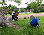 维护列管珍贵老树,苗县启动老树健检。 (苗县府/提供)