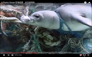 塑膠垃圾對海洋生物造成嚴重傷害,許多海洋生物因誤食塑膠,或被塑膠纏繞而痛苦死亡。(綠色和平/提供)