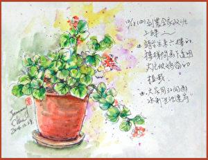 淡彩速写 / 室内盆栽(图片来源:作者 邱荣蓉 提供)