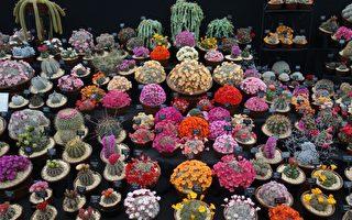 组图:游切尔西花展 领略世界顶级花展芳容
