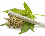 本月初,州长克里斯蒂在普林斯顿举行的药物滥用和心理健康大会上,再次明确反对大麻合法化。图为大麻烟叶与大麻烟草。(Fotolia)