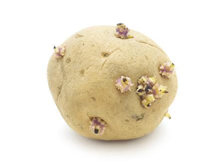 馬鈴薯應貯藏在低溫、無直射陽光照射的場所,以防生芽。(Fotolia)
