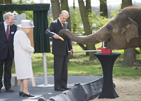 到目前为止,菲利普亲王已经代表王室出席了22,191次活动,并进行了637次国外单独访问。(Photo by David Rose - WPA Pool/Getty Images)