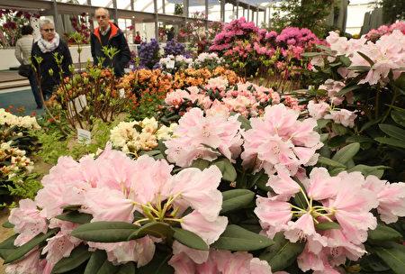 十年一回的柏林國際花園展 (Sean Gallup/Getty Images)