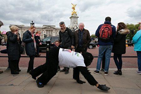 坚持不懈的猩猩先生。(DANIEL LEAL-OLIVAS/AFP/Getty Images)