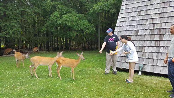 游客喂食小鹿。(大纪元)