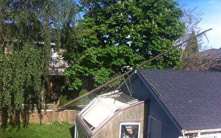 圖說:5月23日的一場大風暴橫掃整個卑詩。圖為溫哥華地區列治文市一住戶的一棵碗口粗的落葉松樹被刮到,砸壞了柵欄,倒向鄰居家的車房。(唐風/大紀元)