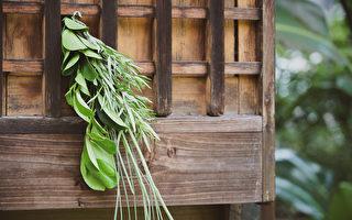 端午节为何在门户悬挂艾草和菖蒲?